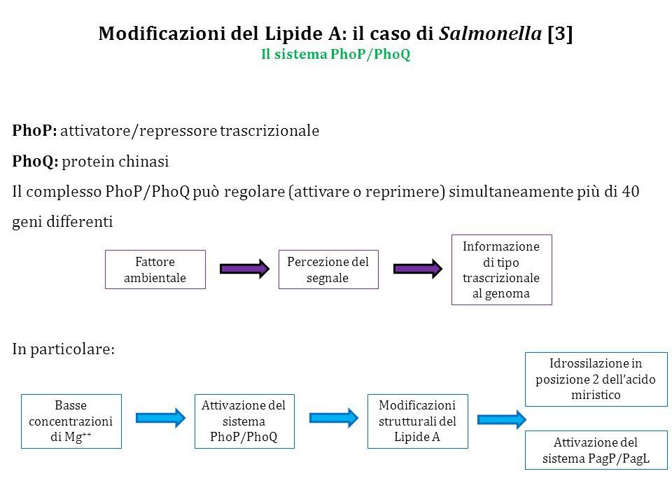 Modificazioni del Lipide A: il caso di Salmonella [3] Il sistema PhoP/PhoQ